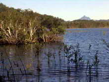 Cudgen Lake with Mt Warning in the background