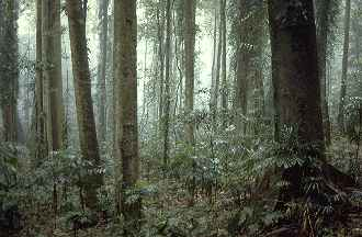 Subtropical rainforest photo © by David Palmer