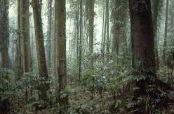 Rainforest by David Palmer