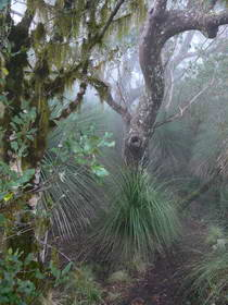 Border Ranges National Park